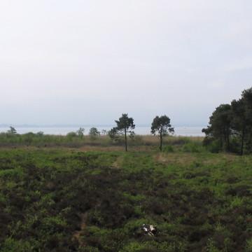 Blick vom östlichen Moor zum Steinhuder Meer