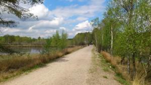 Lüneburger Heide_fr25